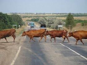 Знаки предупреждающие дорожного движения картинки с пояснениями